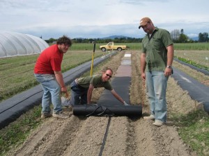 laying-BT-mulch-1-Lg