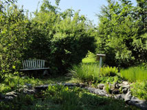 Photo of native plant garden