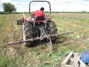 tractor-cut-Lg