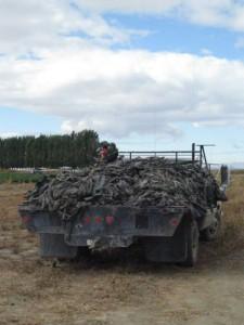 waste-truck-Lg