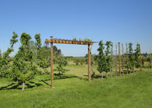 Photo of WWFRF Orchard