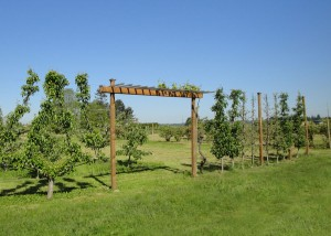 Entry trellis flanked by fruit trees.