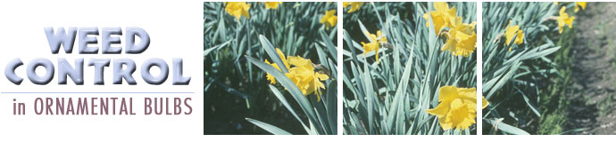 Weed Control in Ornamental Bulbs