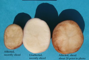 A photo of tuber symptoms post peeling.