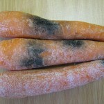 Black root rot on stored carrots.