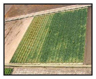 Photo of arial view of onion seed crop