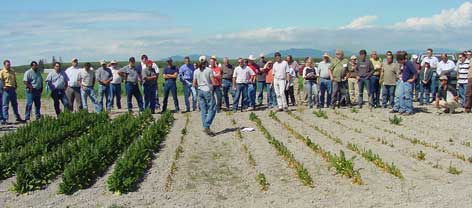 Registrants from the 2006 International Spinach Conference visited a WSU spinach seed crop field trial in Skagit Co., in which lime amendments are being evaluated for control of Fusarium wilt in the acid soils of western Washington.