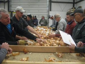 Researchers evaluate onions on a table.