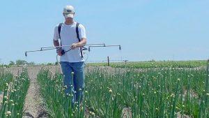Man uses a 4-head backpack sprayer in an onion field.