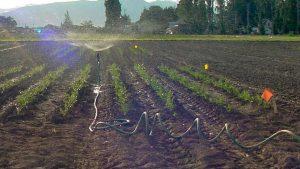 Hose-fed sprinkler showering part of a field.