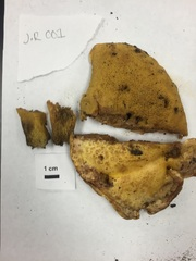 Avis collections from IUN Fungi Lab Foray 1