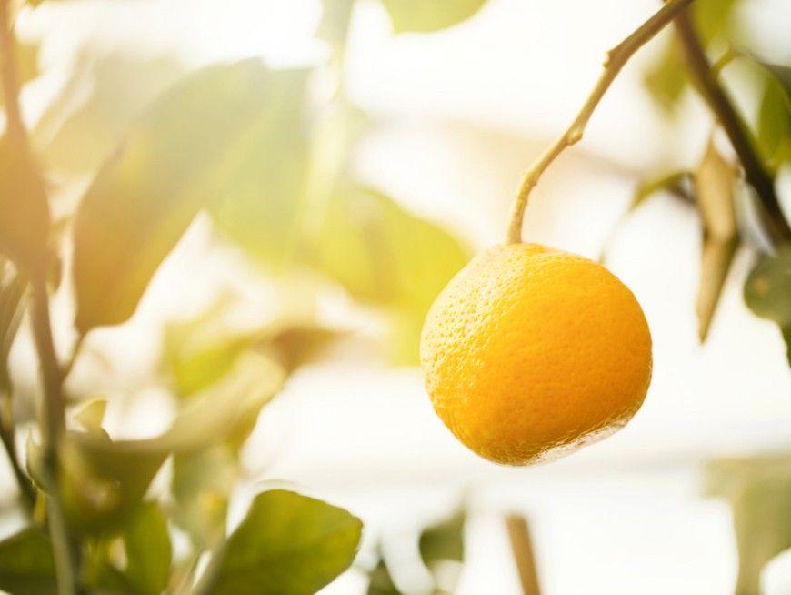 Pick and eat mouth-watering seasonal fruit