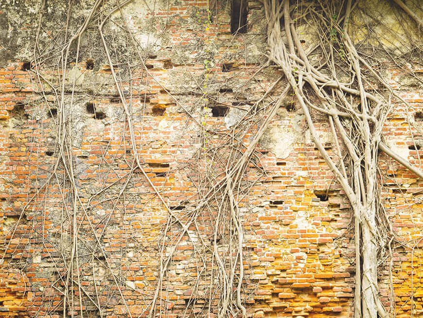 Visit an old Dutch castle and an ancient banyan tree