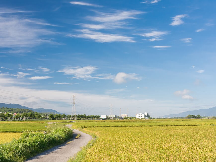Cycle on beautiful roads and bike paths passing through rice paddies and flower filled fields.