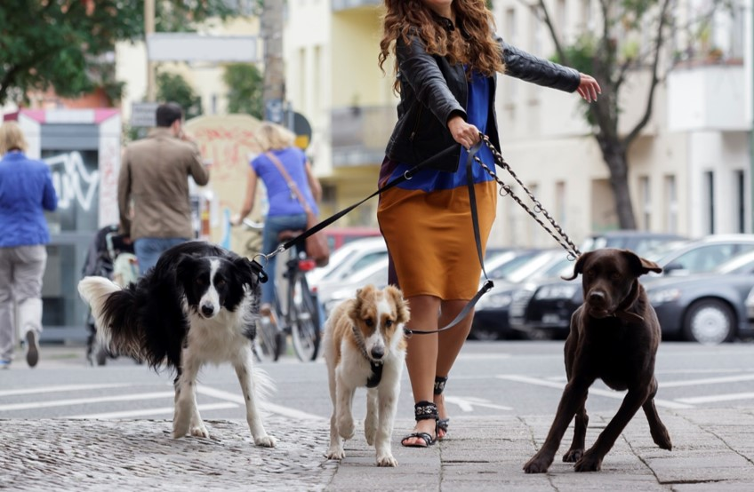 Ladie walking dogs for homepage