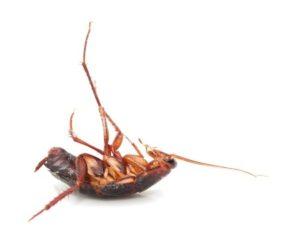 Cockroach Control West Palm