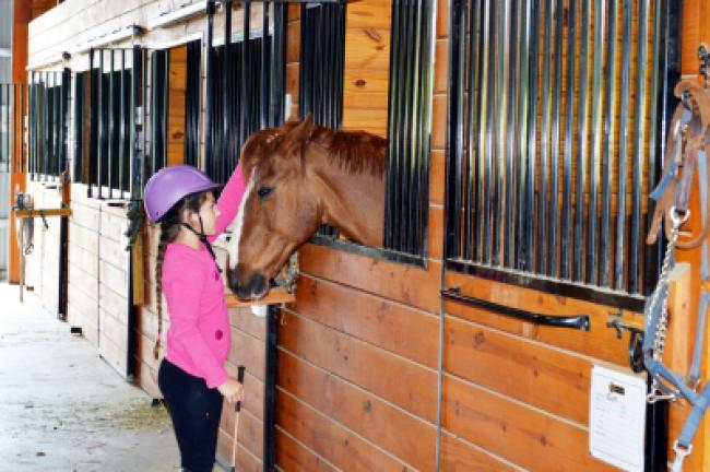 Ellie Apollo pets one of the horses kept at Apollo Farms in Palmerton. KRISTINE PORTER/TIMES NEWS