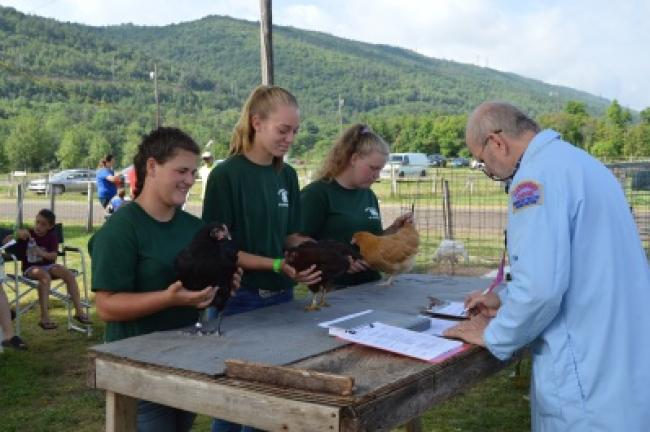 From left, Karissa Costenbader, Chelsea Eckhart and Jenna Wallace show their chickens to American Poultry Association judge Elton Minnic during the showmanship portion of the event. BRIAN MYSZKOWSKI/TIMES NEWS