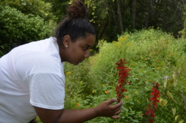 Anais Martinez checks the condition of a flower in the river garden she worked on at the Lehigh Gap Nature Center over the summer. BENJAMIN WINN/TIMES NEWS