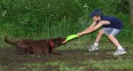 "ANDREW LEIBENGUTH/TIMES NEWS While playing at a park at the West Penn Rod and Gun Club, Jacob Irish, 9, tries to pull ""Sadie"" out of a mud puddle using a frisbee. Sadie is cared for by Jesse Nicholas."
