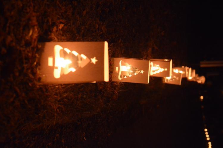 AH_-Ram-Pasture-Tree-Lighting-luminaries-bright-pic1.jpg