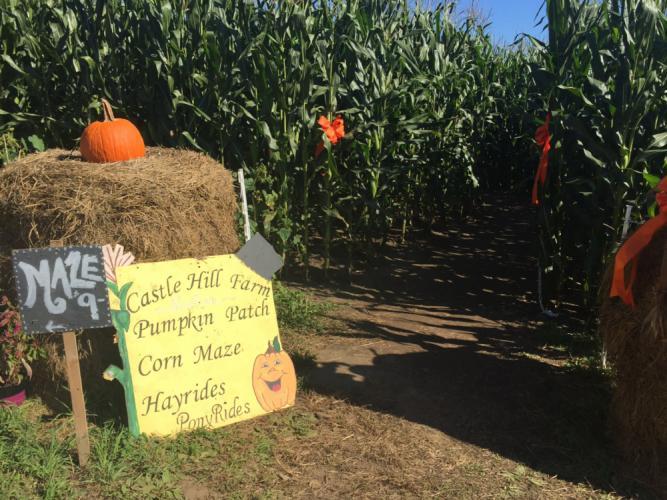 The farm features a themed corn maze each year.  (Bee Photo, Silber)