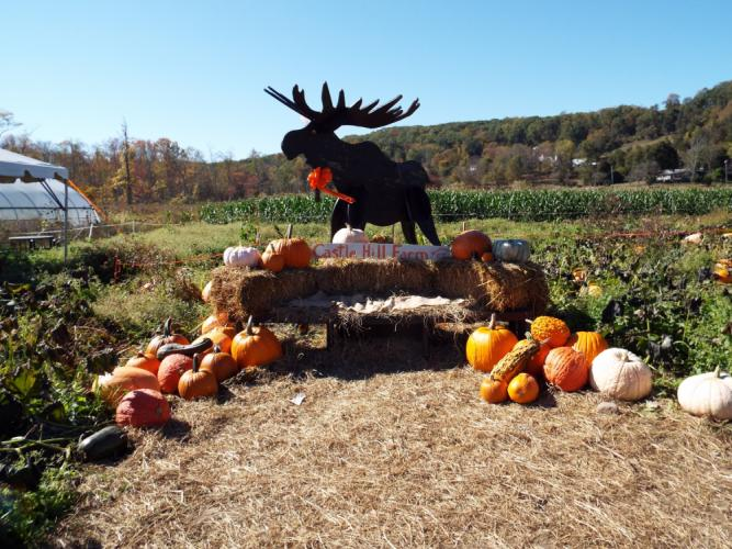 Castle Hill Farm, 25 Sugar Lane, offers pick-your-own pumpkins and has a wide selection of precut options available.  (Bee Photo, Silber)