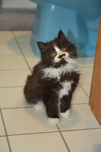 Kitten Associates of Sandy Hook took in Pistachio earlier this month, giving him his name as a play on words in honor of the marking under his nose that looks like a mustache. (Bee Photo, Silber)