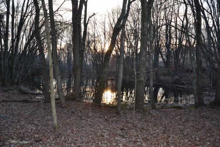 There are two ponds located on the Sandy Hook permanent memorial property. (Bee Photo, Silber)