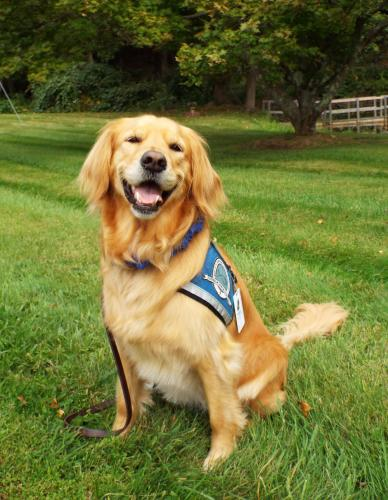 Golden retriever Maggie is a specially trained Lutheran Church Charities K-9 Comfort Dog for Christ the King Lutheran Church. After Hurricane Harvey hit Texas, she was deployed on September 1 to help comfort the people affected by the storm. (Bee…