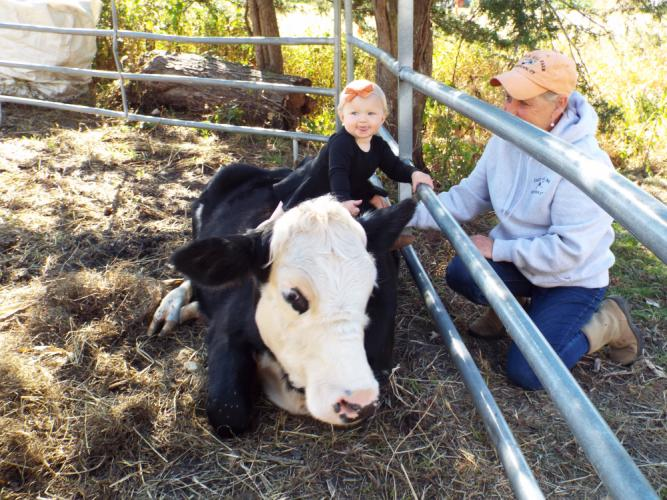 """Charlotte Kearns """"saddles up"""" a Castle Hill Farm cow while grandmother Diana Paproski keeps an eye on her.  (Bee Photo, Silber)"""