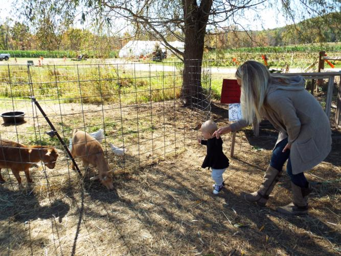 Stephanie Paproski Kearns and daughter Charlotte visit the goats and chickens on the farm.  (Bee Photo, Silber)