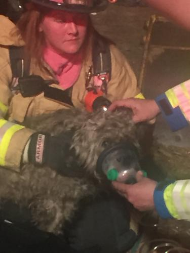 Firefighters provided oxygen to a pet dog that was rescued from a burning basement at a house fire on Toddy Hill Road, on the night of April 10. The dog recovered and was well on April 11.  (Botsford Fire Rescue photo)