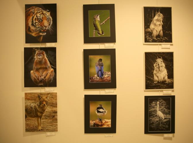 Photographs by Chane Cullens in one section of the hallway showed animals that were both exotic and familiar. (Bee Photo, Hallabeck)
