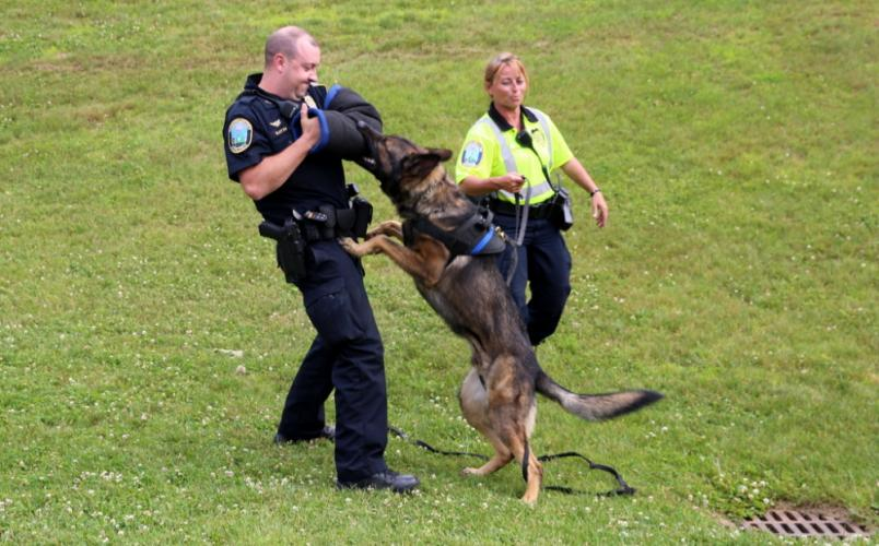 Newtown Police Officer Matt Hayes braces as Newtown Police Department K-9 Aris demonstrates an attack under Newtown Police K-9 Officer Felicia Figol's command at the Middle Gate Madness event.  (Bee Photo, Hallabeck)