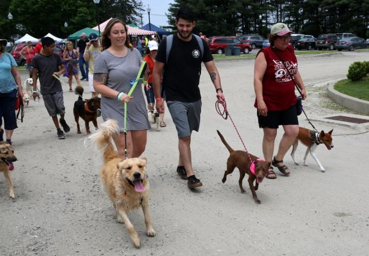 Victoria Queen and Max, left, with Angelo Poggi and Mango, and Newtown Parks & Recreation Assistant Director RoseAnn Reggiano and her dog, Kiro, walk near the start of the annual Strutt Your Mutt walk on June 2. (Bee Photo, Hallabeck)