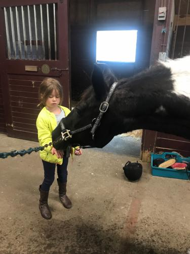 A young camper at Fox Ridge Farm gets hands-on experience feeding one of the black and white horses in the stables.(photo courtesy of Pat Gregory)