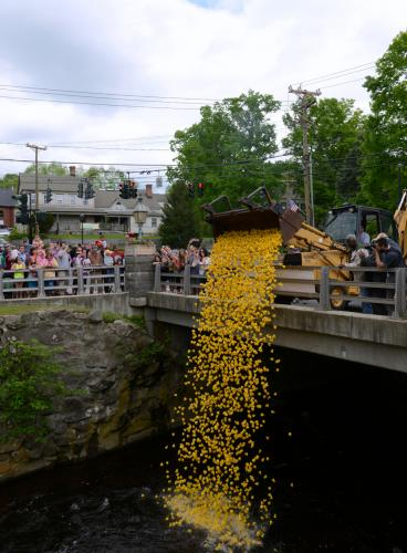 A cheering crowd watched ducks rush toward the Pootatuck and splash into the water at shortly past 2:30 pm Saturday, May 24. The first 20 ducks to cross a finish line established downstream were the race winners. This year's annual duck race…