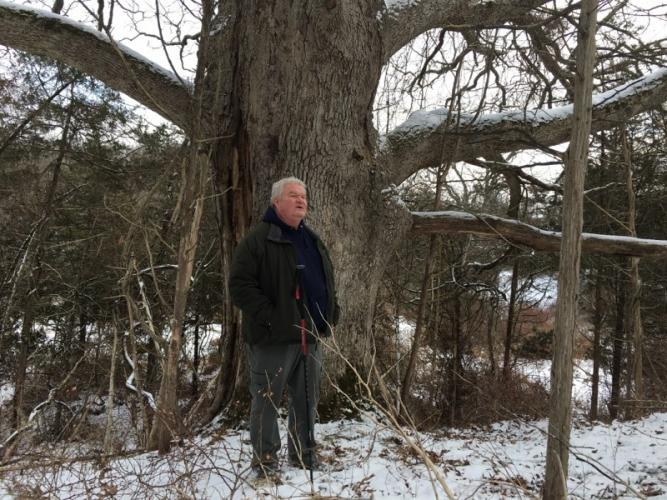 Newtown Forest Association member and arborist Dan Dalton spent much of a public hike at Cherry Grove Farm December 16 highlighting many of the parcel's key features, including a massive oak tree.  (Bee Photo, Bobowick)
