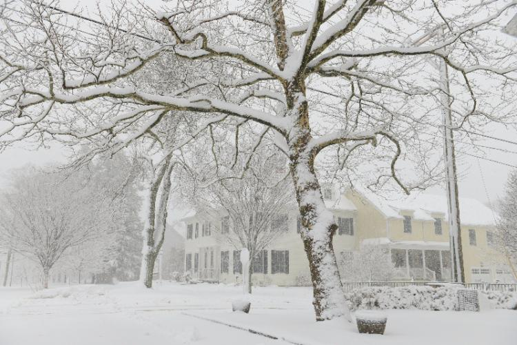 Snow covers tree limbs and rooftops alike Wednesday afternoon, finally beginning to stick by late afternoon. The Dana-Holcombe House, viewed from the north,  is blurred by stormy gusts.  (Bee Photo, Bobowick)