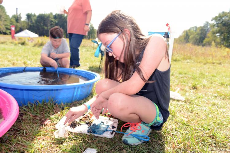 Mia Hochstetler inspects the pond debris for insects. -Bee Photo, Bobowick