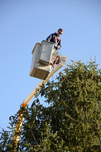 Newtown Public Works employee Jeff Thomas goes up in a bucket truck again this year to string lights in Sandy Hook Center. -Bee Photos, Bobowick