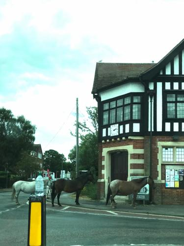 Three New Forest ponies make a pub visit in the village of Brockenhurst.