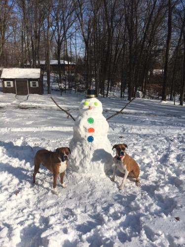 Longing for the tennis ball eyes, these two dogs pose by a post-storm snowman.