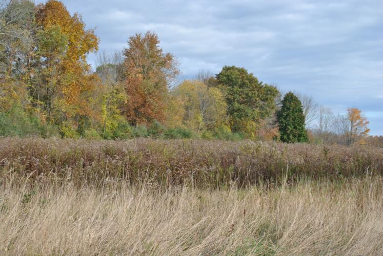 A community garden could spring from the overgrown plot of goldenrod, seen at the far end of this meadow in this photograph, is one vision for the animal sanctuary planned for the property near Old Farm Road.      &nbsp…