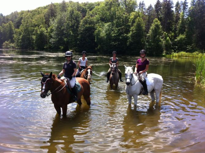 Liz Sacksteder, front left, with her horse Mira; Anna Dilworth, back left, on Sunny Brook Farm's Jordan; Morgan Lavelle, back right, on Sunny Brook Farm's Rudy, and Dakota Wissell, front right, on Sunny Brook Farm's Mystery, took a ride together…