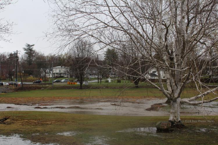 SH_Monday-rain-Ram-Pasture-white-birch-ponding.jpg