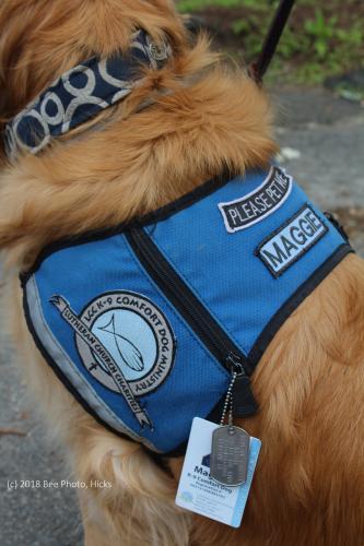 SH_Newtown-Comfort-Dog-Team-Maggie-update-Maggie-vest-tags-WATERMARKED.jpg