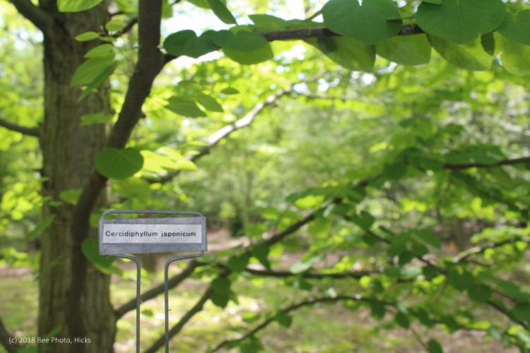 SH_historical-society-house-garden-pvw-specimen-tree-with-tag-HORIZONTAL-WATERMARKED.jpg