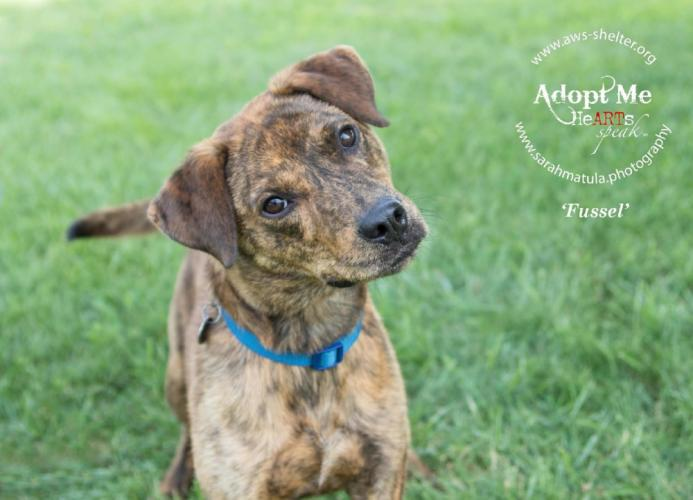 Sarah Matula commonly uses a variety of techniques like treats, squeakers, and her famous Donald Duck voice while photographing. Here she was able to capture Fussel's attention for the perfect head tilt. Fussel is adoptable at Animal Welfare Society…